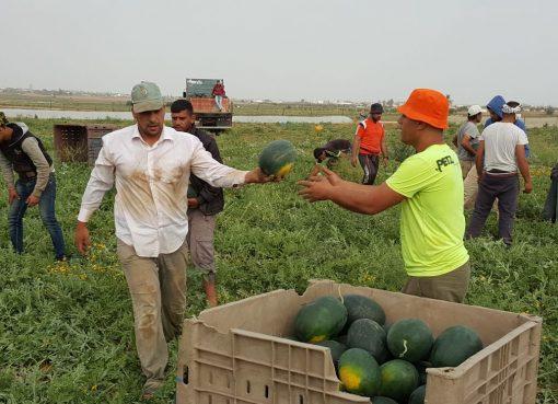 منتجات زراعية غزة